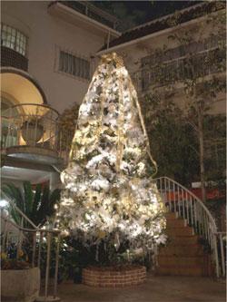 2010 クリスマスツリー登場